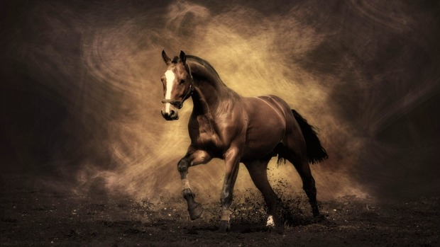 Horse HD Wallpaper