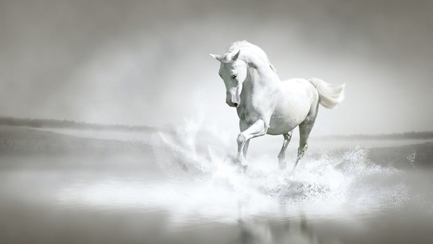 Horse High Definition Wallpaper