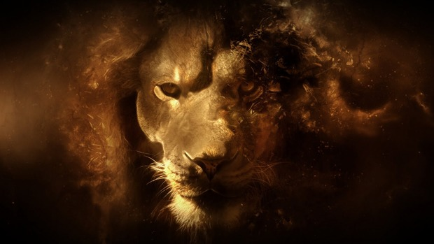 Lion Wide Wallpaper