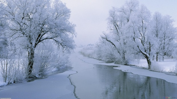 Winter Widescreen Wallpaper