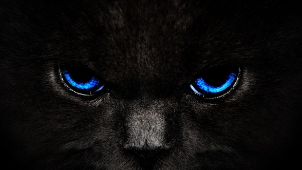 Panther HD Wallpaper