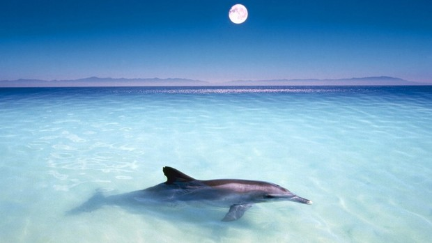 Dolphin Desktop Wallpapers