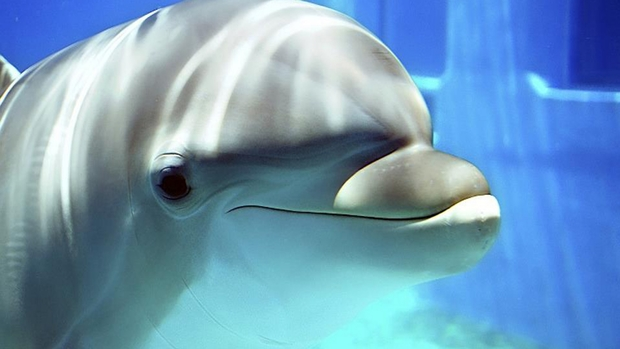 Free Dolphin Wallpaper
