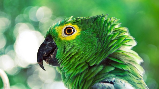 Awesome Parrot Wallpaper