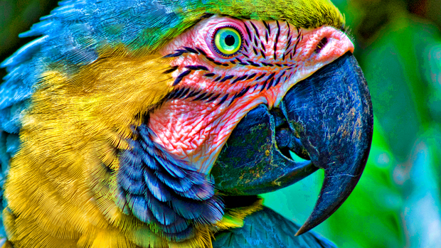 Parrot Desktop Backgrounds