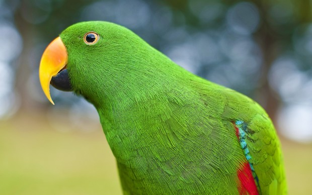 Parrot High Definition Wallpaper