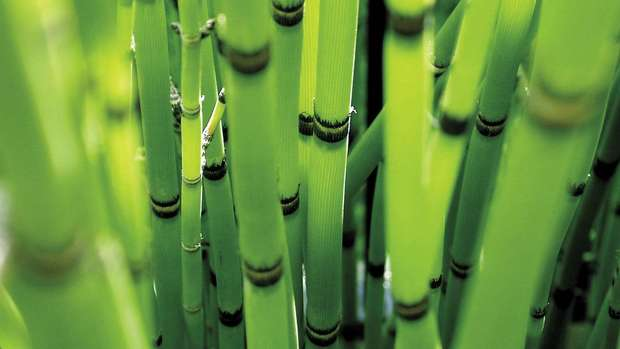 Awesome Bamboo Wallpaper