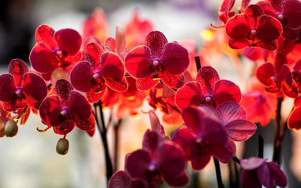 Awesome Orchids Wallpaper