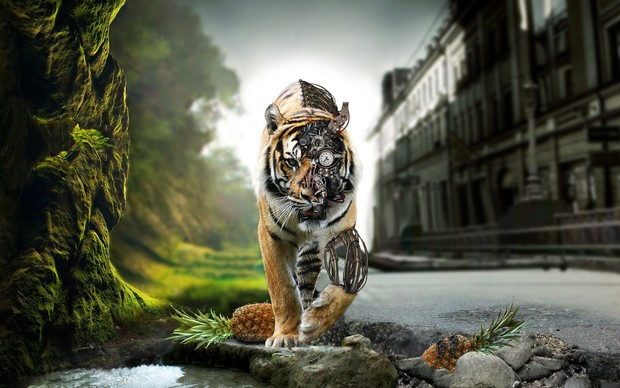 Awesome Tiger Wallpaper
