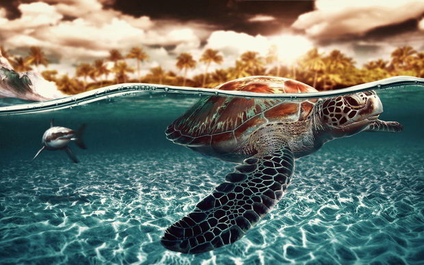Awesome Turtle Wallpaper