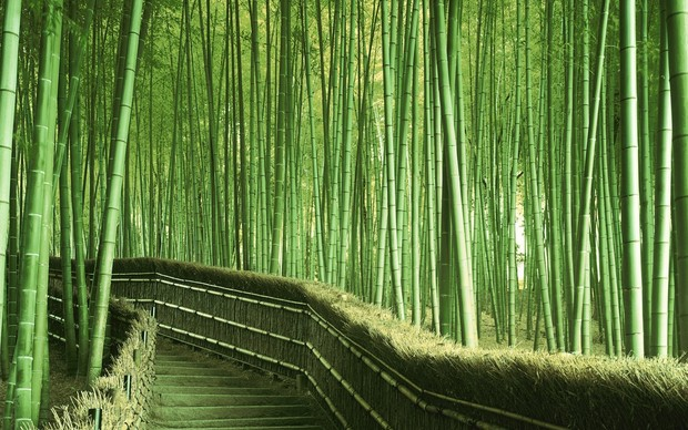 Bamboo Desktop Background