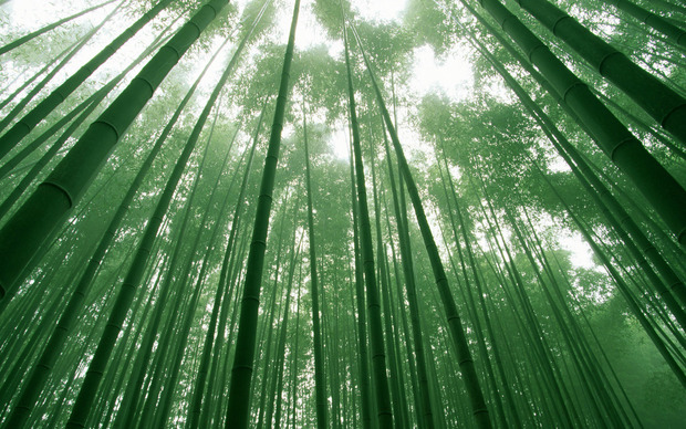 Bamboo Desktop Wallpapers