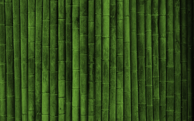 Bamboo Picture