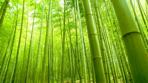 Beautiful Bamboo Wallpaper