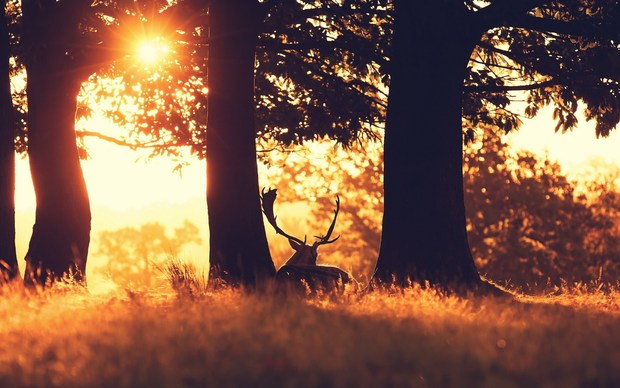 Latest Deer Wallpaper