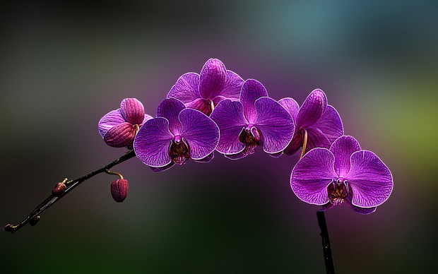 Orchids High Definition