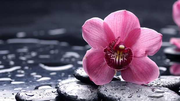 Orchids High Quality Wallpaper