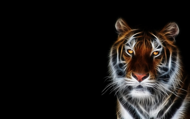 Tiger High Definition Wallpaper