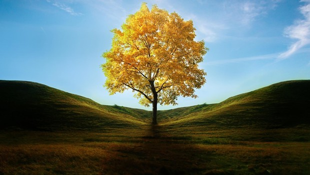 Tree HD Wallpaper