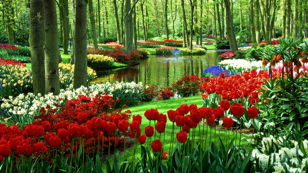 Tulips High Definition Wallpaper