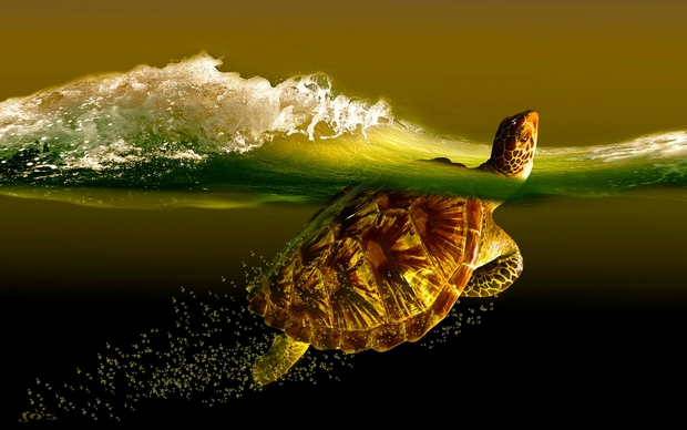 Turtle Desktop Wallpapers