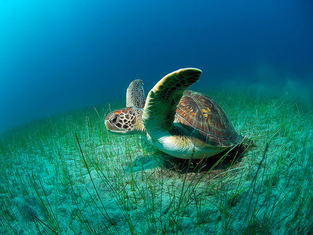 Turtle High Definition Wallpaper
