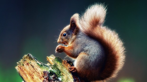 Squirrel Backgrounds