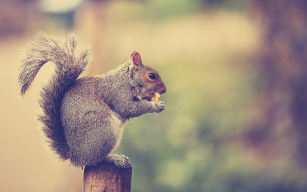 Squirrel Desktop Backgrounds