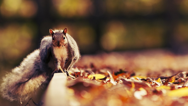 Squirrel HD Wallpaper