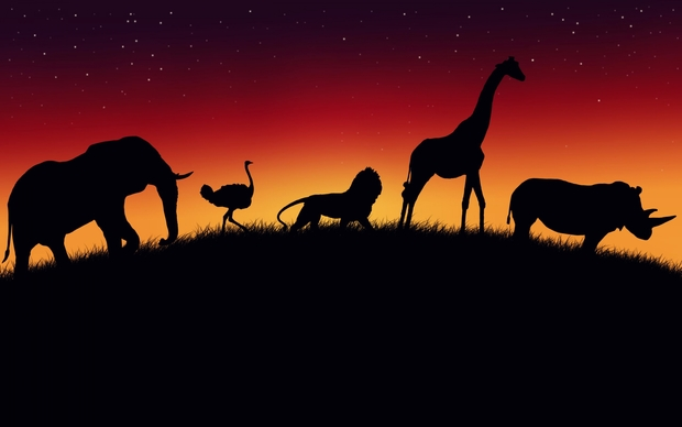 Africa Backgrounds