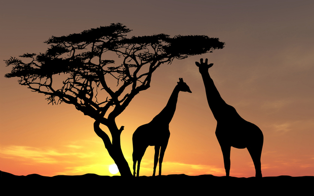 Africa Desktop Wallpaper