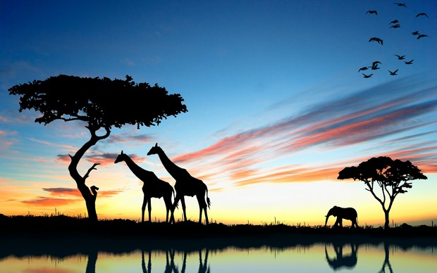 Awesome Africa Wallpaper