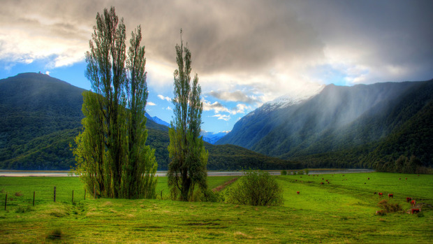 New Zealand Background