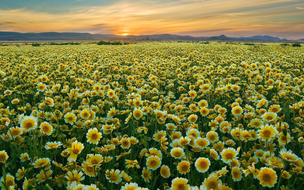 Beautiful Flower Field Wallpaper