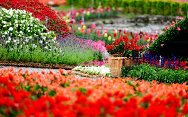 Flower Garden High Quality Wallpaper
