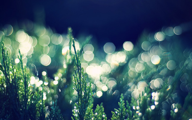 Beautiful Bokeh Wallpaper