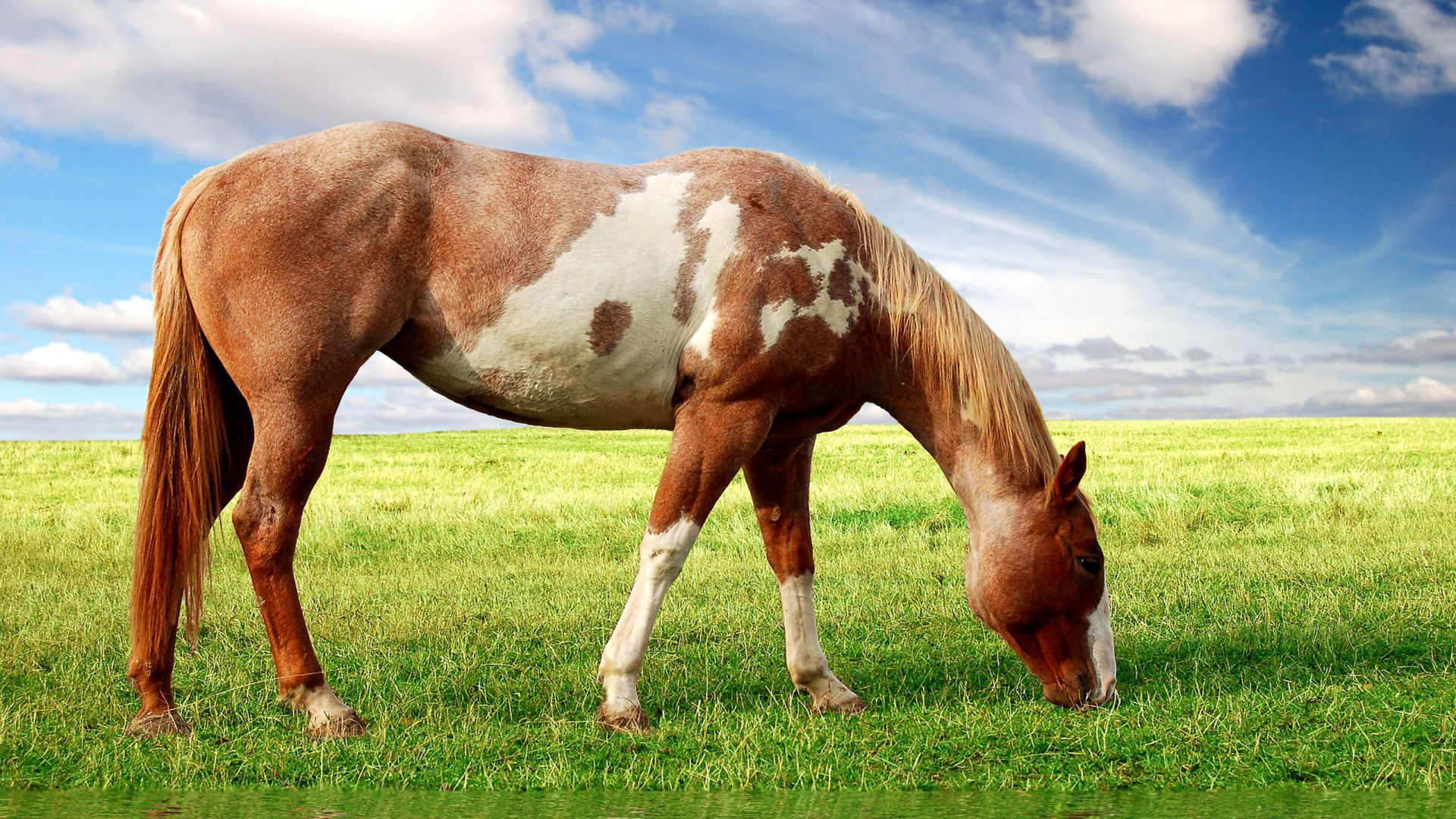 Horse wallpapers best wallpapers - Free horse backgrounds ...