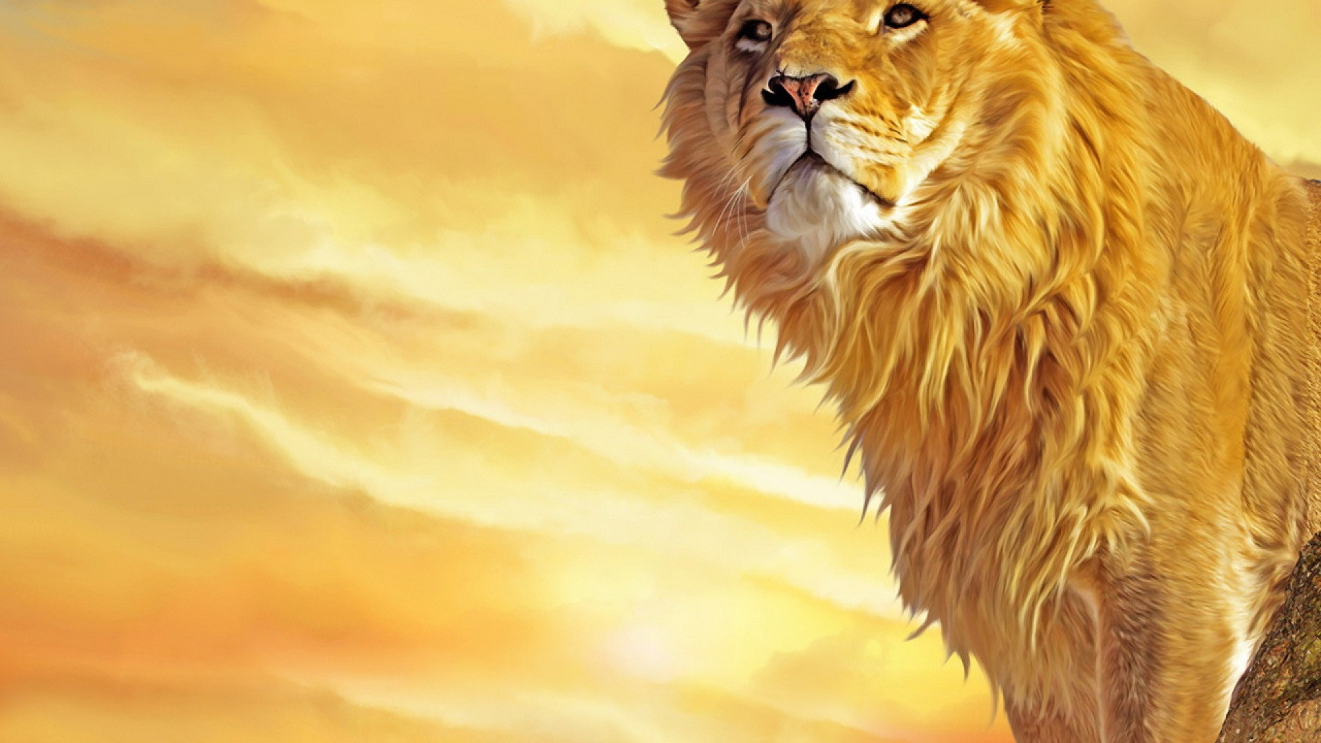 Amazing Wallpaper Logo Lion - lion-background_015819506_22  Collection_784129.jpg