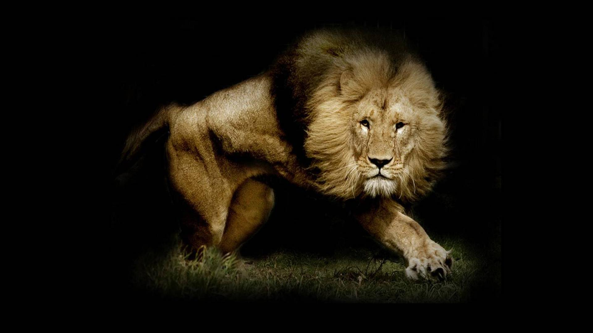 Lion WallpapersRoaring Lion Hd Wallpapers 1920x1080