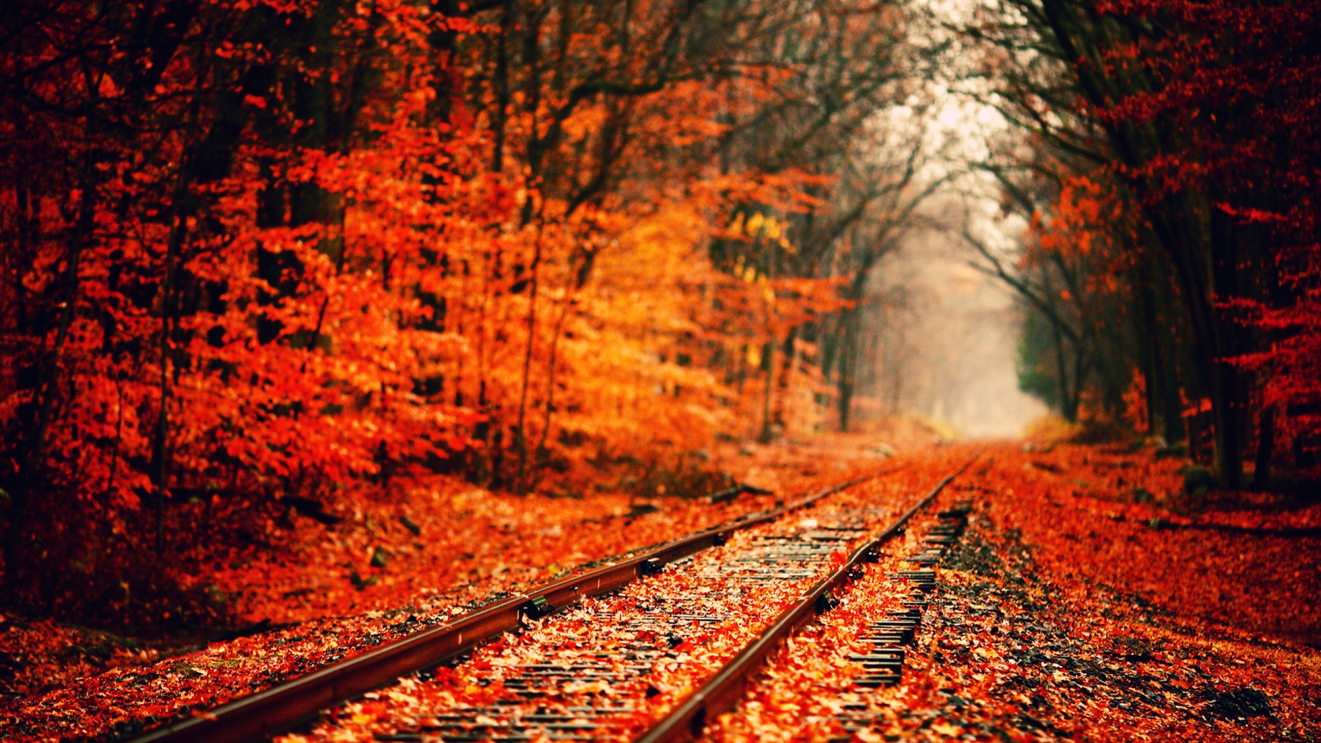 fall wallpaper widescreen monitor - photo #24