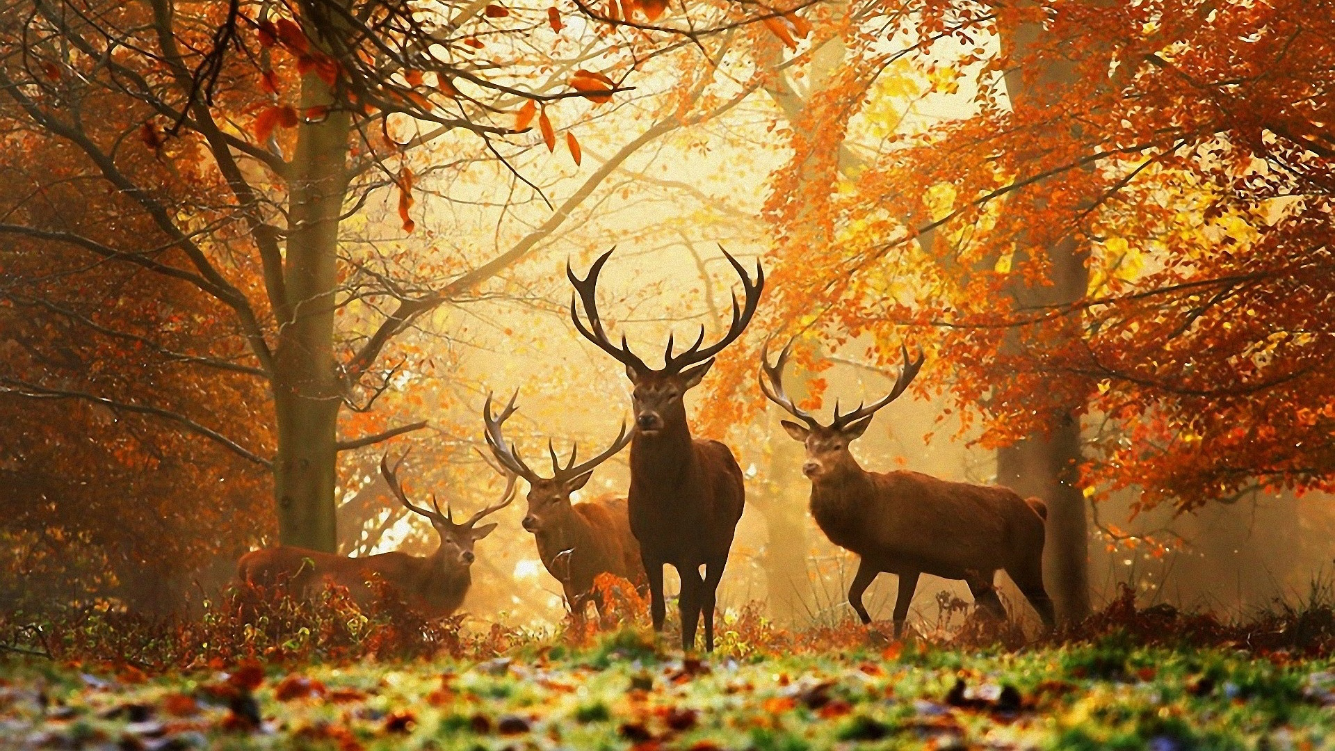 Group Of Autumn Wallpaper Widescreen Which