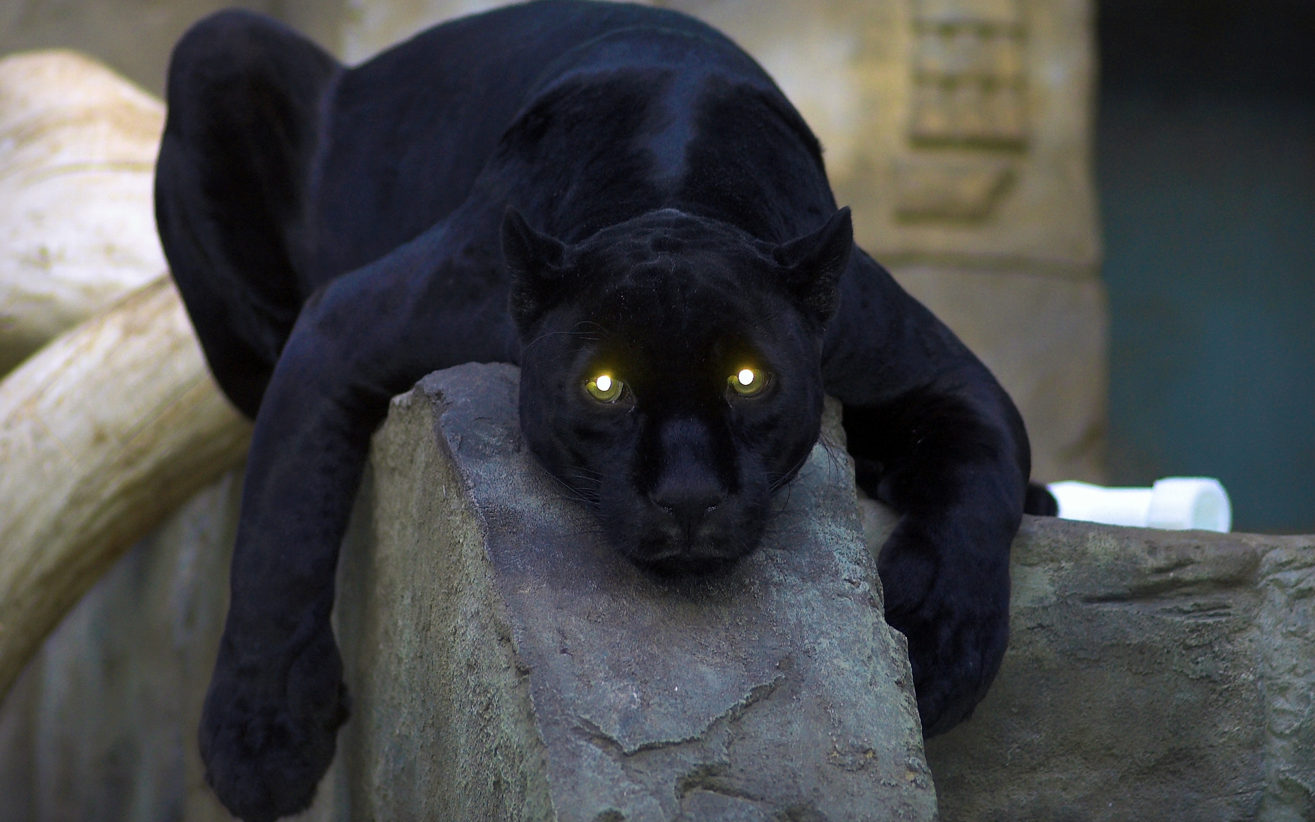 panther wallpaper images amp pictures   becuo