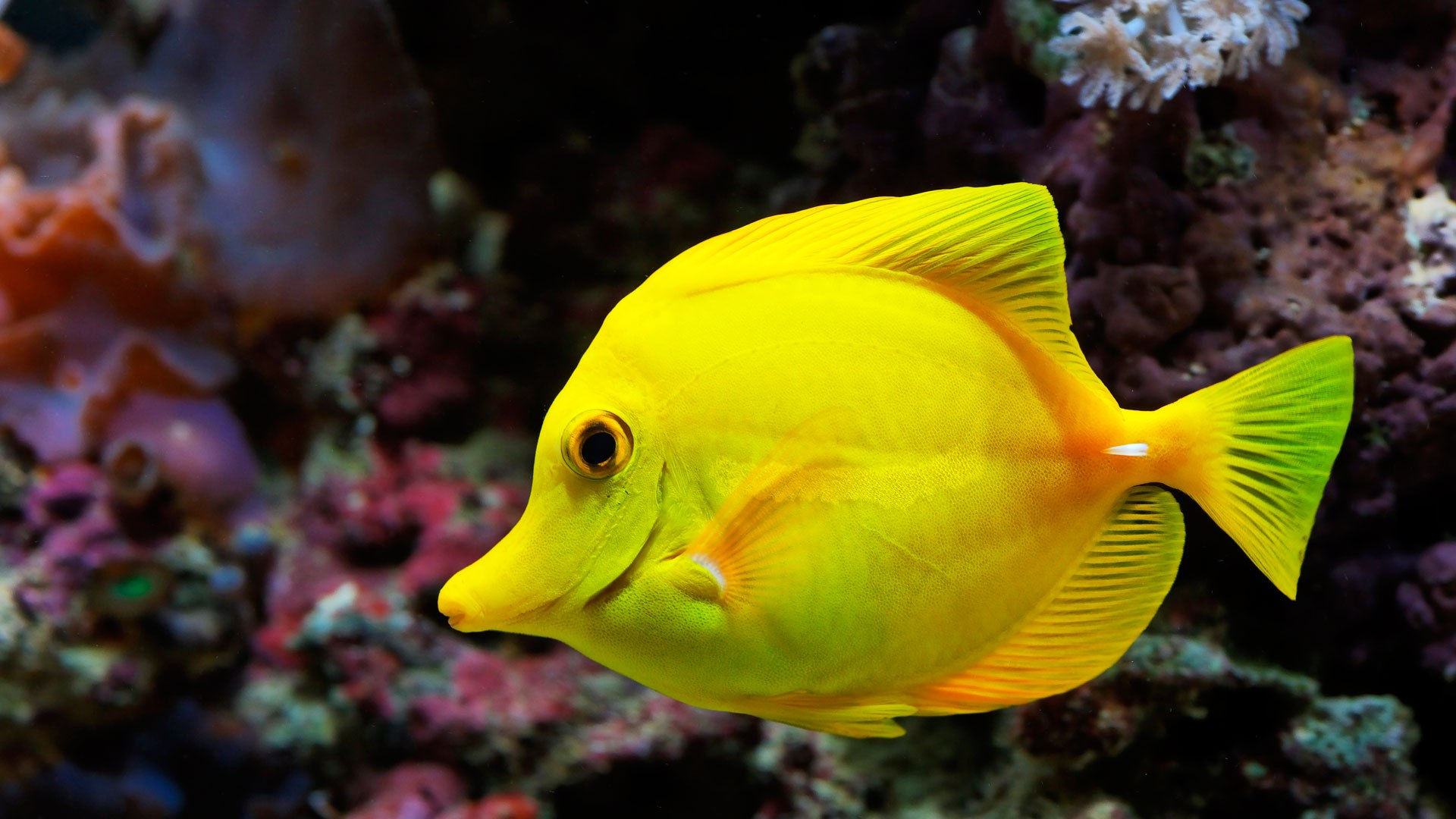 Fish wallpapers best wallpapers for Small tropical fish