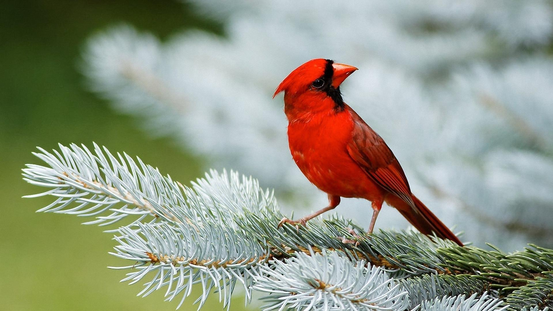 Birds wallpapers best wallpapers Pictures of birds