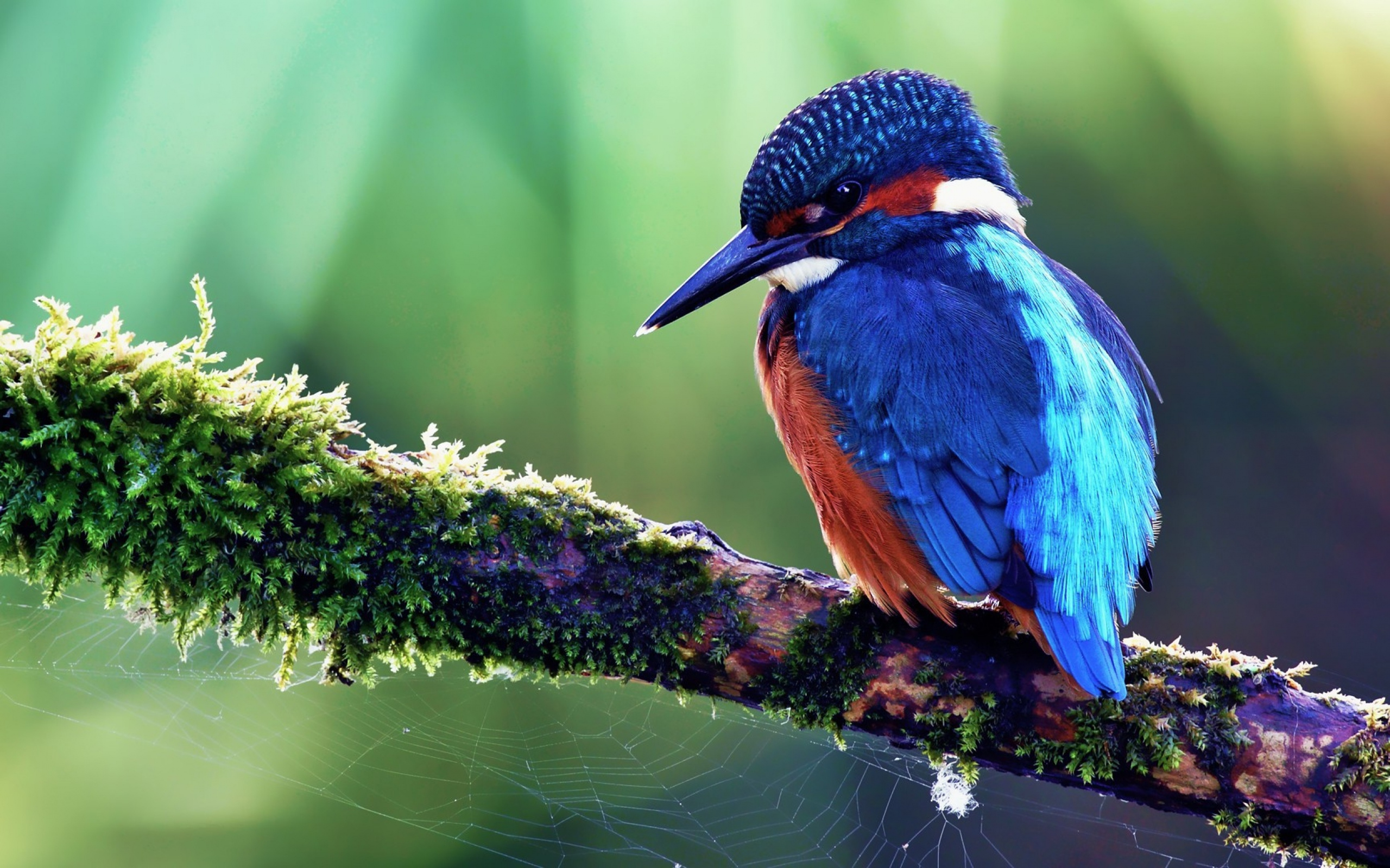 Birds wallpapers best wallpapers - Hd images of birds of paradise ...