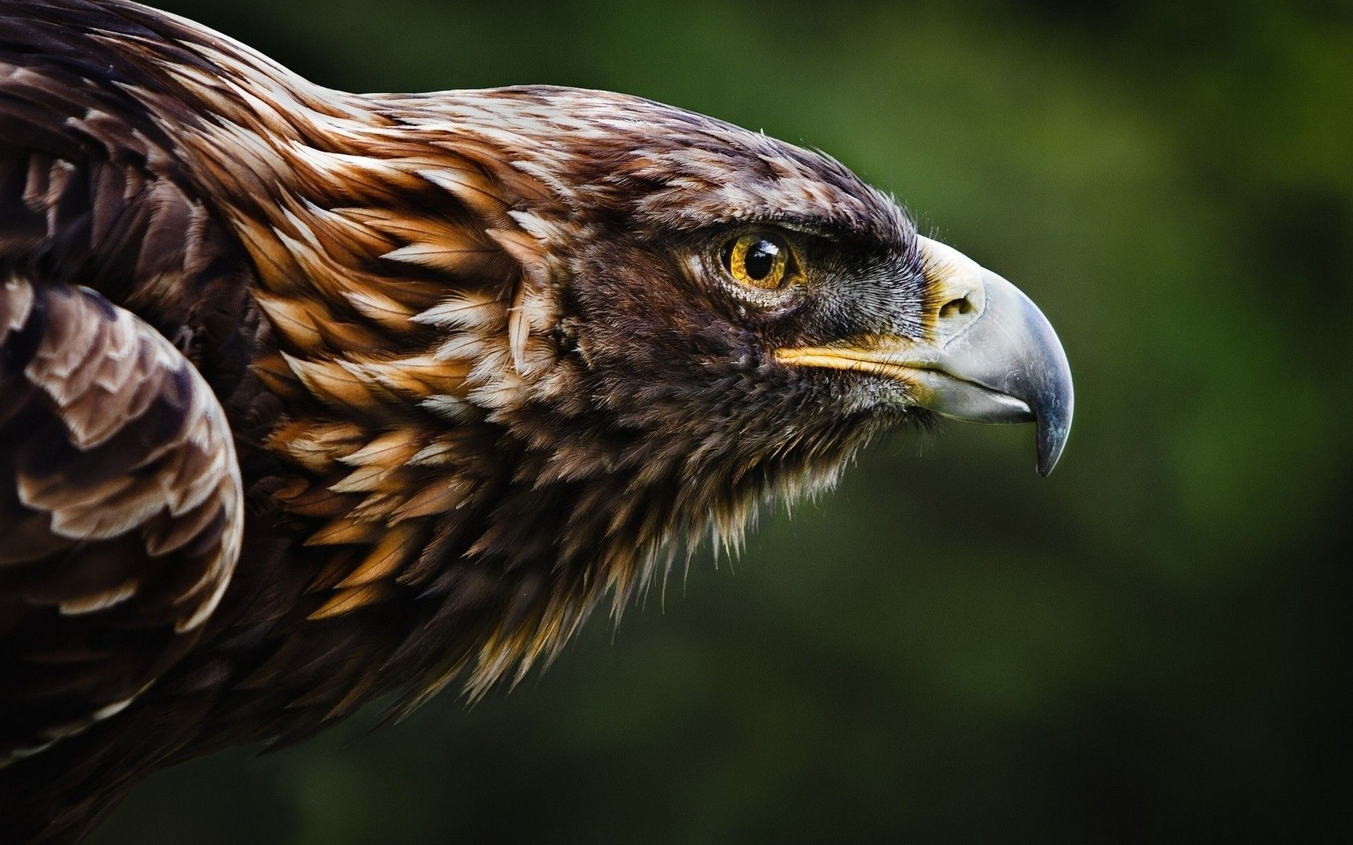 eagles wallpapers best wallpapers