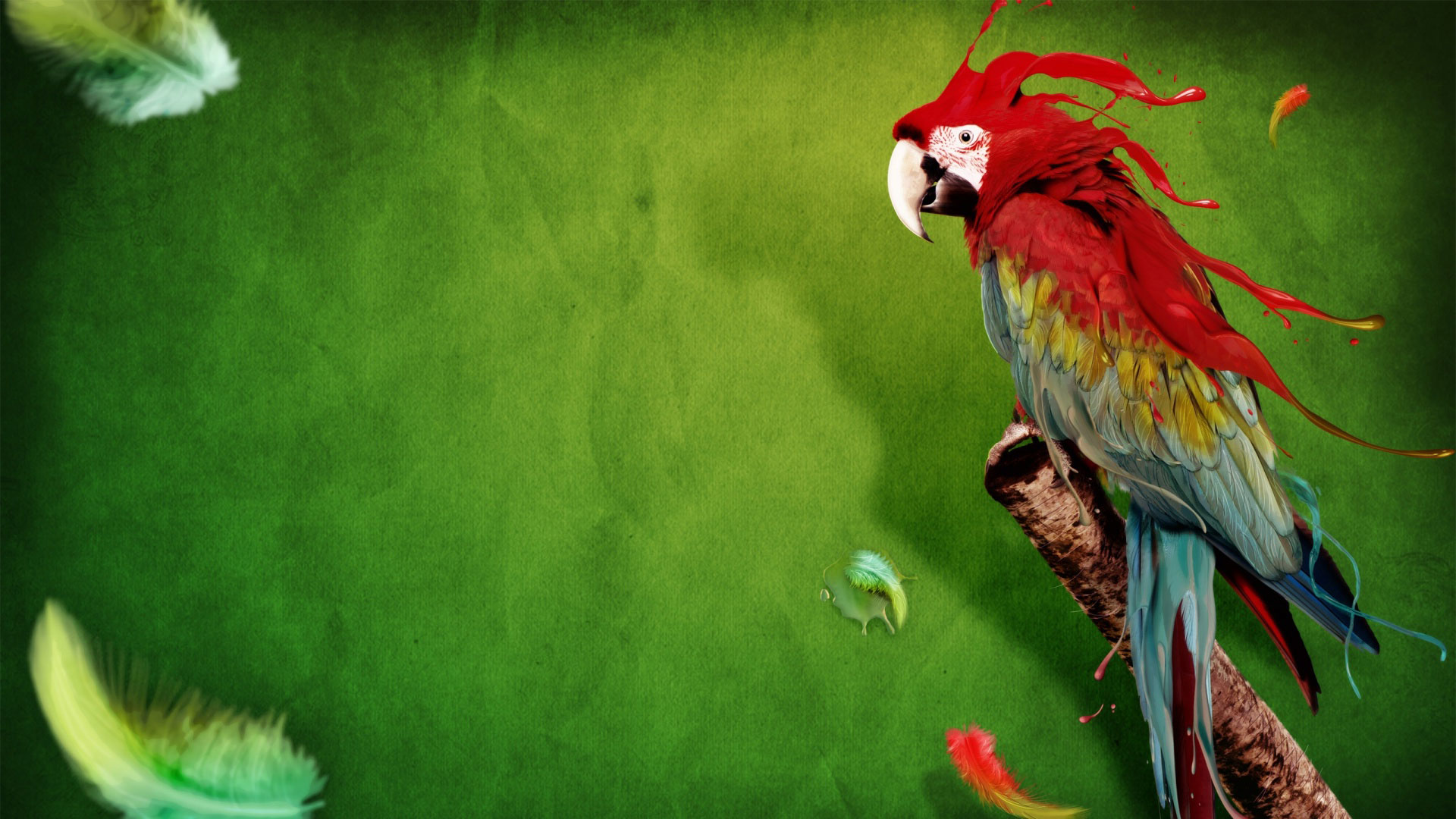 desktop parrot image download - photo #17