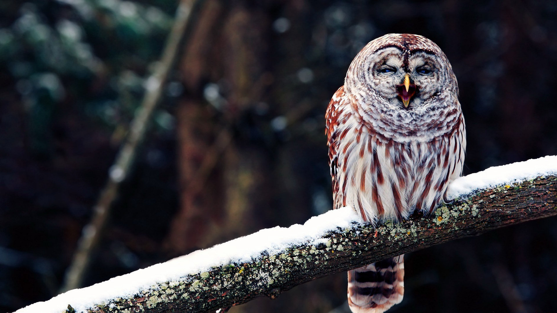 owl wallpapers | best wallpapers