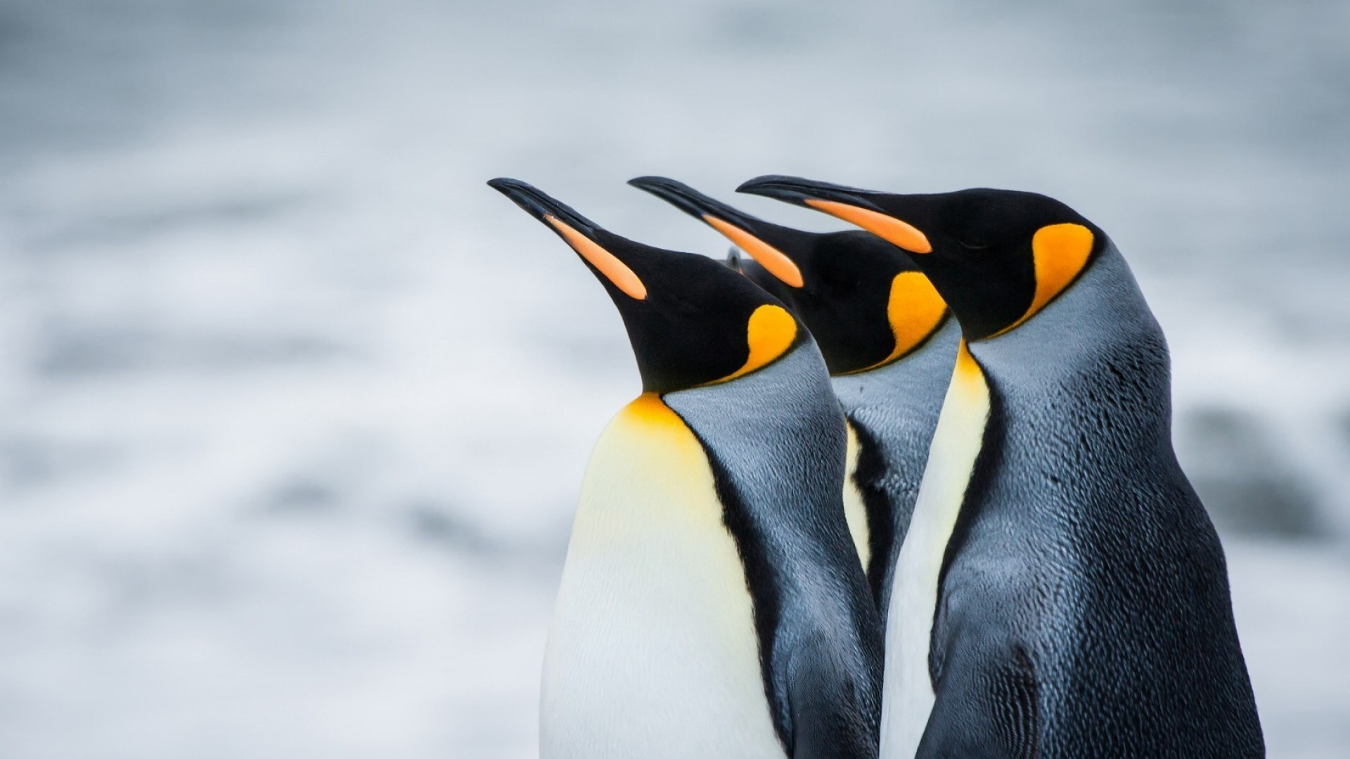 Penguin desktop wallpaper hd - photo#25