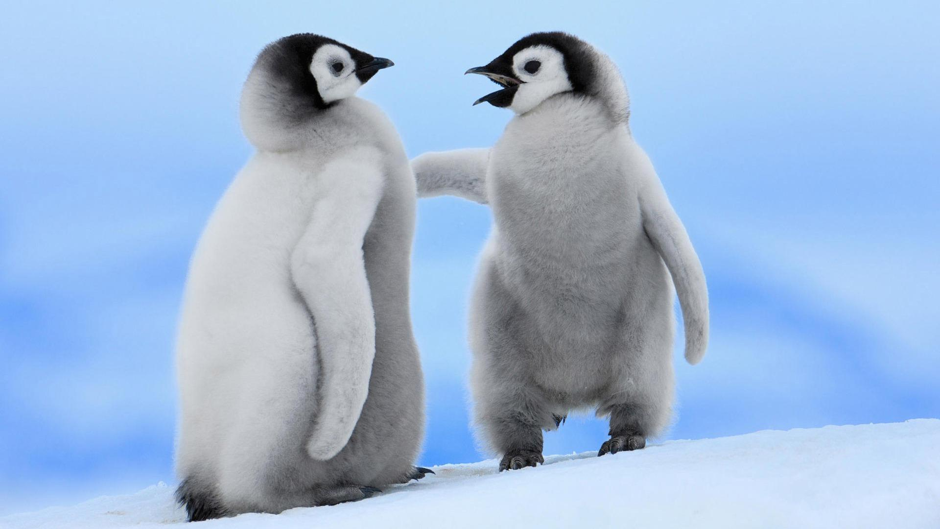 Penguin Wallpapers Best Wallpapers HD Wallpapers Download Free Images Wallpaper [1000image.com]